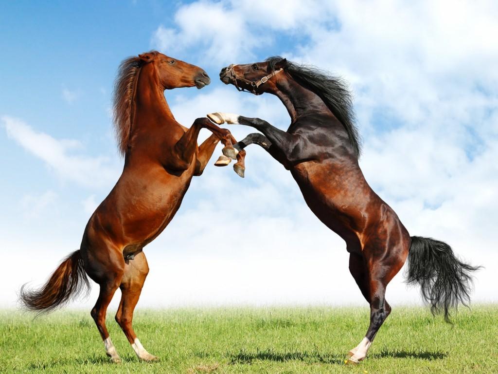 Şaha Kalkmış Atlar