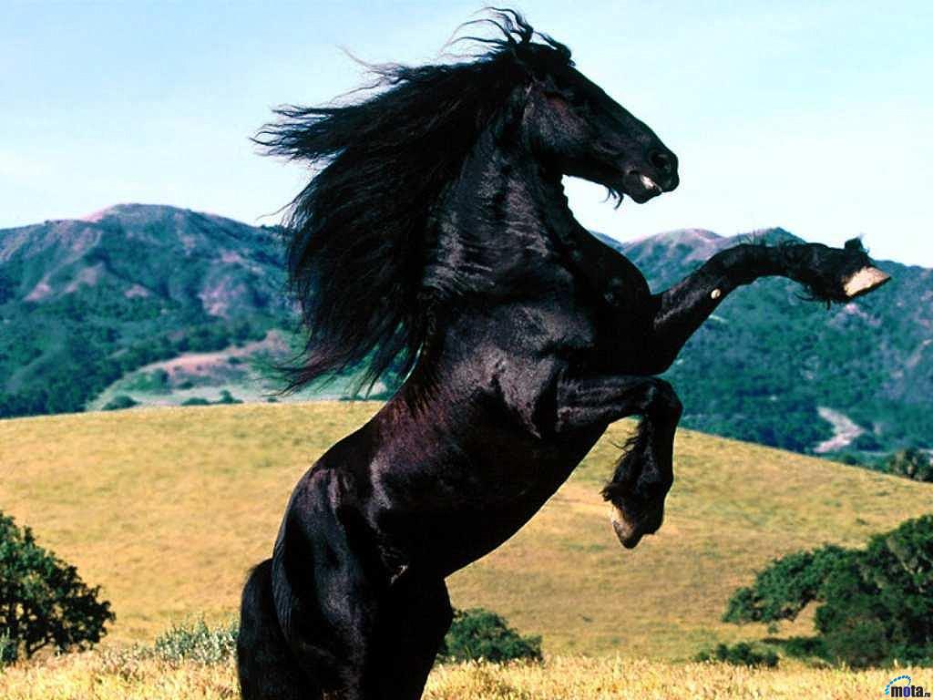 Şaha Kalkmış Yağız At Fotoğrafı