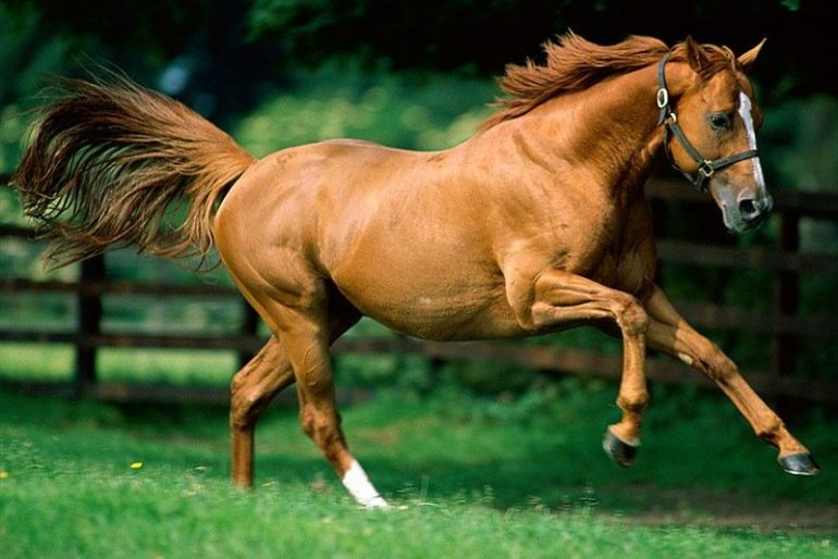 Süper At Resimleri
